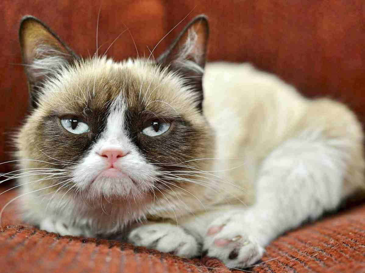 Картинки самых популярных котов, поздравительная открытка