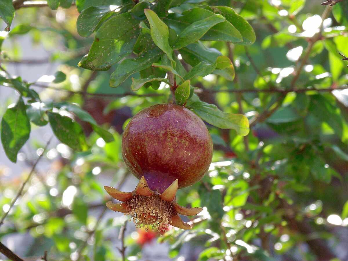 второго численности картинка плоды и цветы на одном дереве украсить беседку свадьбе