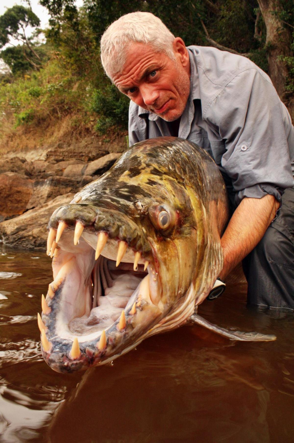 как ловить рыбу в школе драконов